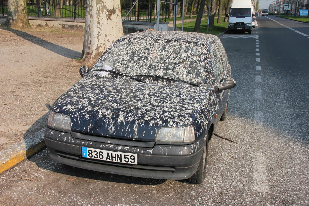 car covered in bird droppings